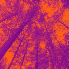 Wilderness wood in Orange by Sophie Douglas of The Arts School digital manipulated photograph printed on Giclee Cnason Aquarelle rag paper size 15 inch x15 inch